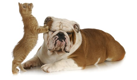 calabel pet care blog
